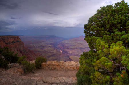Grand Canyon framed by an evergreen with rain storm approaching.
