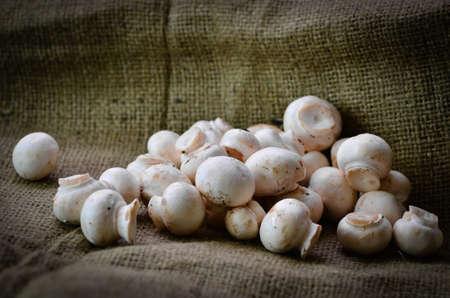 earthy: Fresh earthy mushrooms on a hessian background