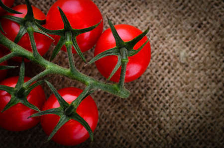 Fresh ripe organic rustic tomatoes on the vine