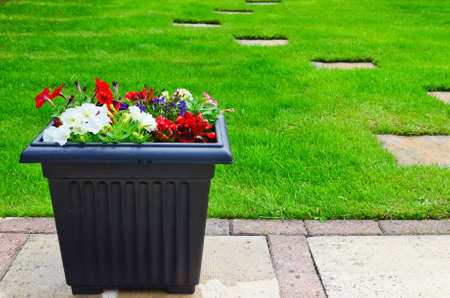 Colourful flower Planters in the garden