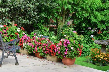 garden flower: English country garden patio area