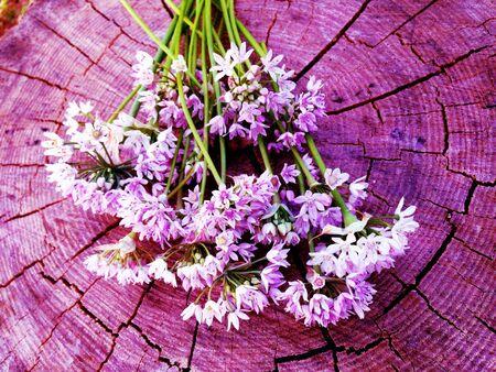 Purple Wildflowers from a Field
