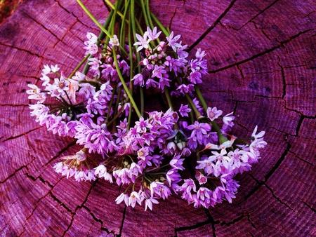 야생화 국가 꽃다발