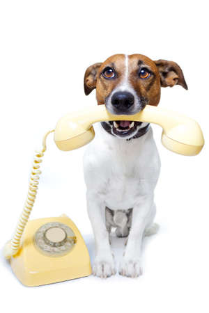 jack russel: dog on the phone Stock Photo