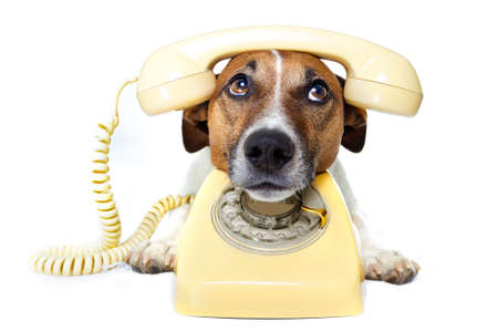 dog on the phone Stock Photo - 11993935