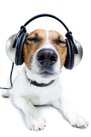 sounds: dog listening music with headphones Stock Photo