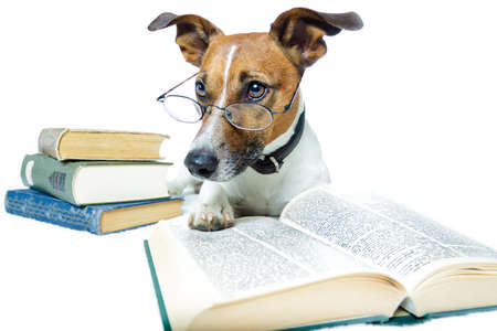 dog sitting: dog reading books