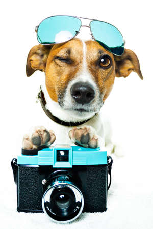 dog using a photacamera with shades  photo