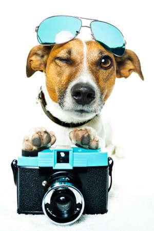 dog using a photacamera with shades  photo