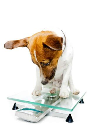 dog health: cane su una scala