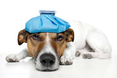 dog feeling sick