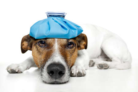 ebre: perro enfermo sentimiento
