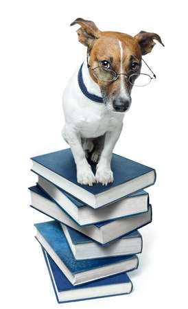 dog school: Dog on a book stack