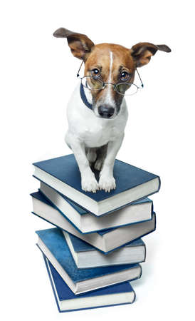 Dog on a book stack photo