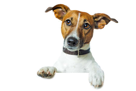 dog holding a white banner Stock Photo