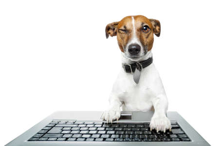 jack terrier: Dog winking and browsing the internet