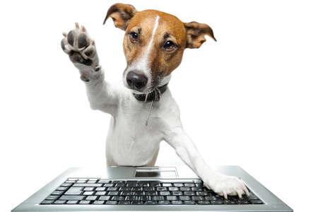dog: 개 인터넷을 검색 스톡 사진