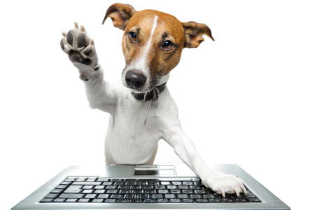 dog sitting: Dog browsing the internet