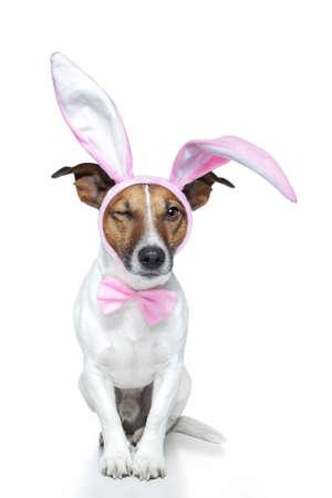 wit konijn: hond verkleed als paashaas