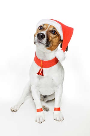 dog dressed as santa photo