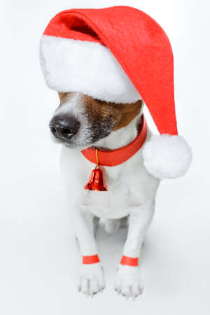 dog dressed as santa  photo