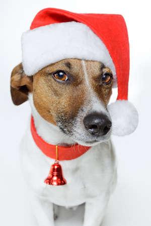 Hund als Weihnachtsmann verkleidet