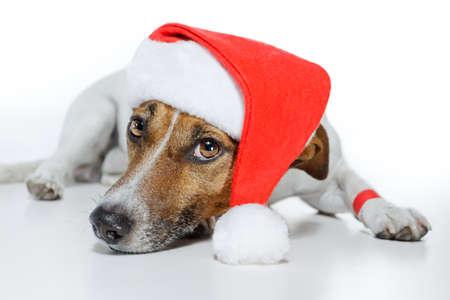 dog dressed as santa Stock Photo - 12009583