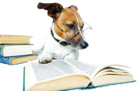 grappige honden: hond het lezen van boeken