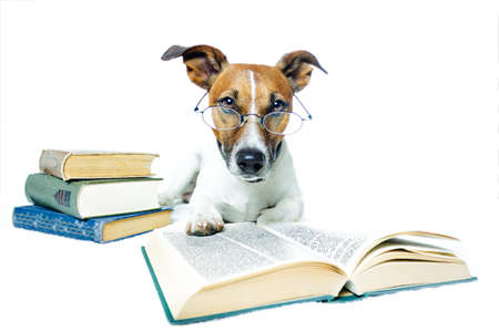 cute dogs: dog reading books