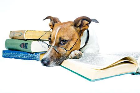 hund läsa böcker Stockfoto