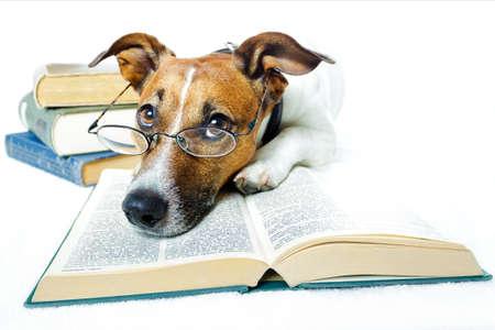 leggere rivista: cane lettura libri Archivio Fotografico
