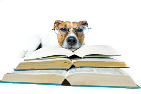 dog reading books photo