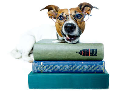 dog school: dog reading books