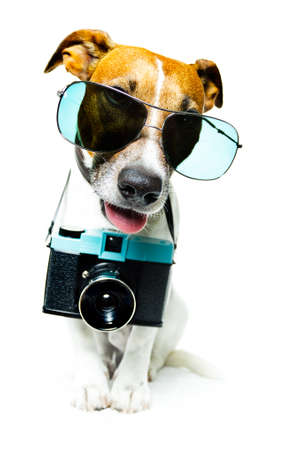 dog with camera taking pictures Stock Photo
