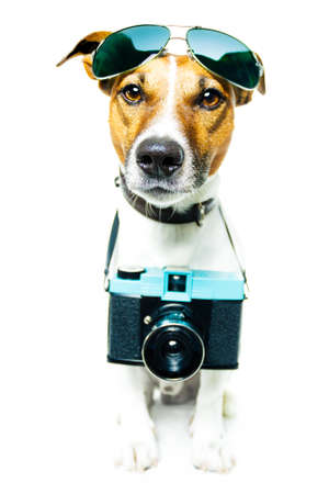 dog with camera taking pictures photo