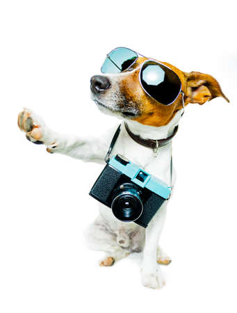 dog with camera taking pictures and high five