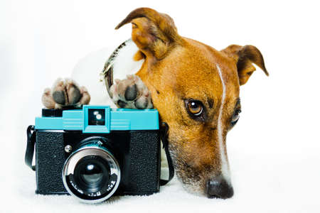 dog with camera and shades photo