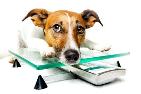 mujer perro: perro en una escala Foto de archivo