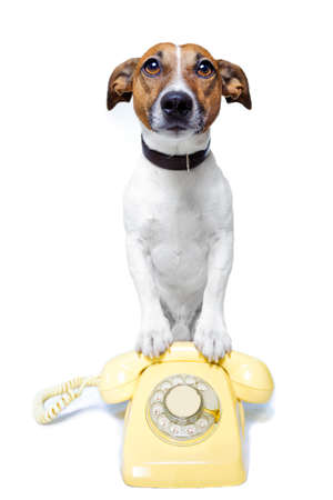 telephone cable: dog on the phone Stock Photo
