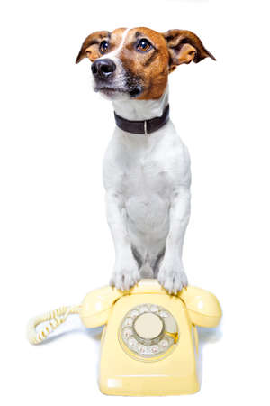 dog on the phone Stock Photo
