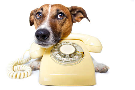 calling on phone: dog on the phone Stock Photo