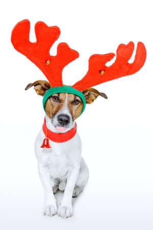 ¢                    â       reindeer: perro vestido como un ciervo Foto de archivo