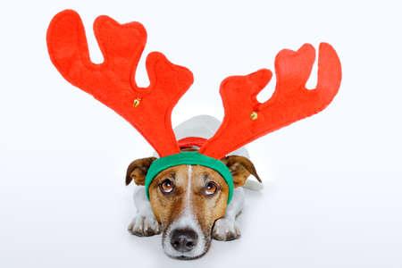 renos de navidad: perro vestido como un ciervo Foto de archivo
