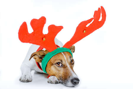 santa moose: dog dressed  as a deer