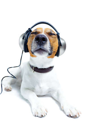 dog listening to music with headphones photo