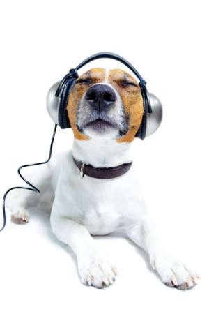 listening to music: perro que escucha m�sica con auriculares