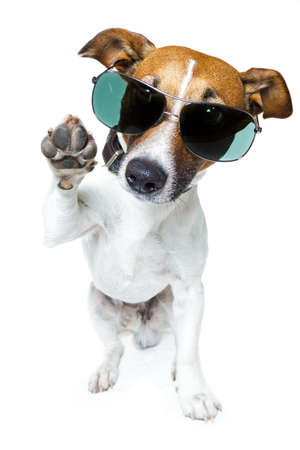 chien avec des nuances Banque d'images