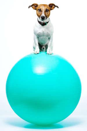 dog sitting on a plastic ball