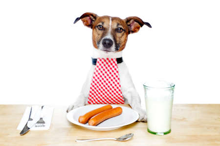 pleasing: Dog at table with milk and food
