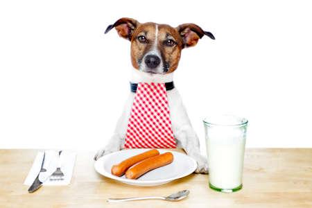 comida perro: Perro a la mesa con la leche y los alimentos